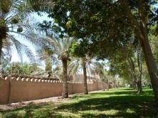 Abu Dhabi_2013 (3) (Medium)